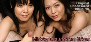 Mint Asakura and Sena Sakura are two Japanese babes stroking one cock